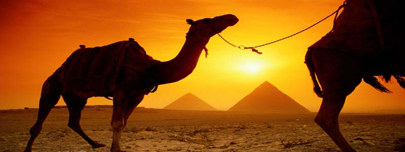 Camels-and-Pyramids